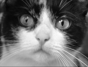 Eine_Gesellschaft_Katze1