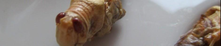 Heuschrecken essen – eine interessante kulinarische Erfahrung